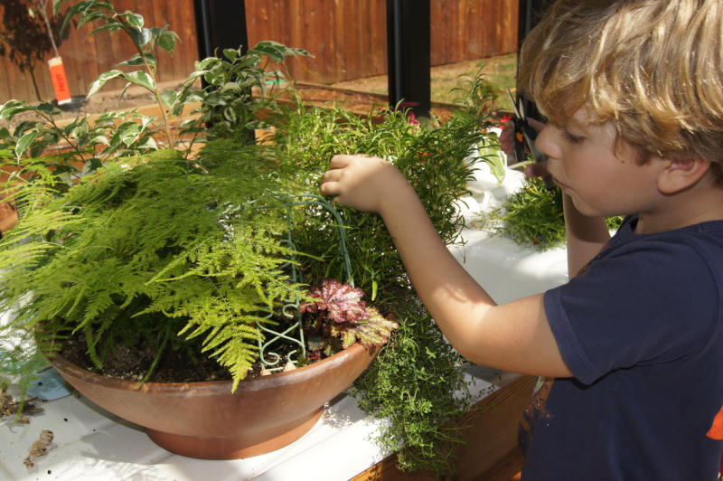 Finn-with-container-garden