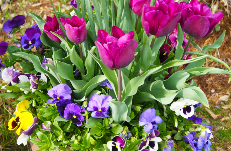 Spring-container