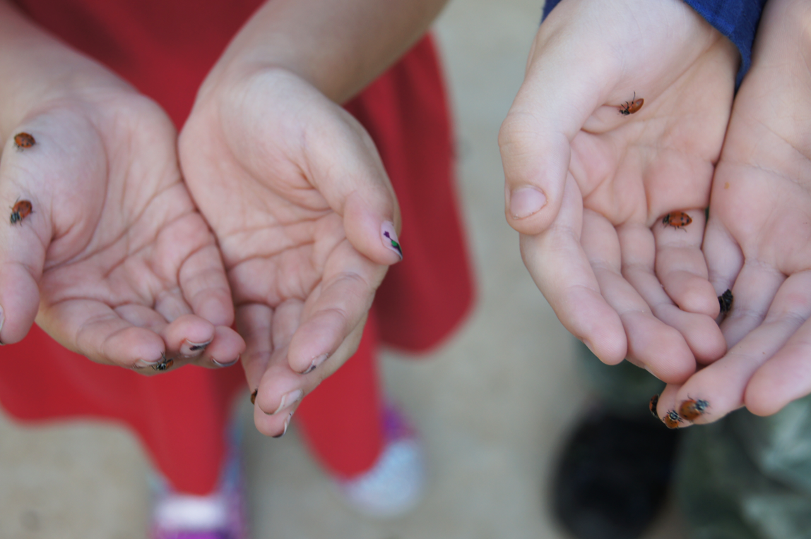 lil'-hands-with-ladybugs