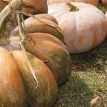 fairytale-pumpkin