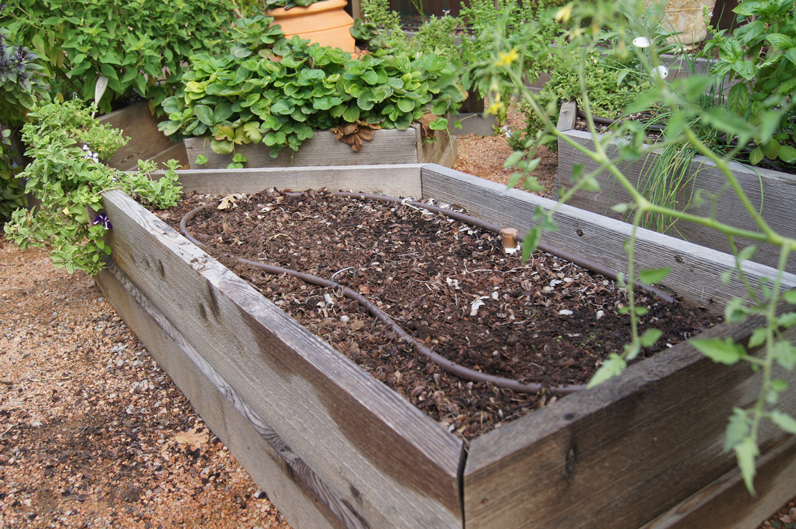 new-bed-for-Chard-and-Spinach