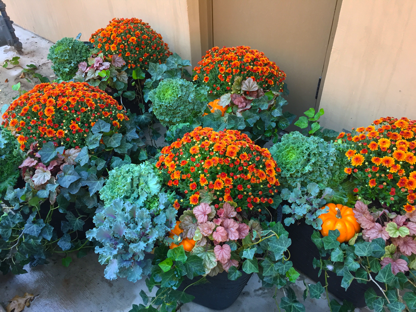 fall-patio-containers