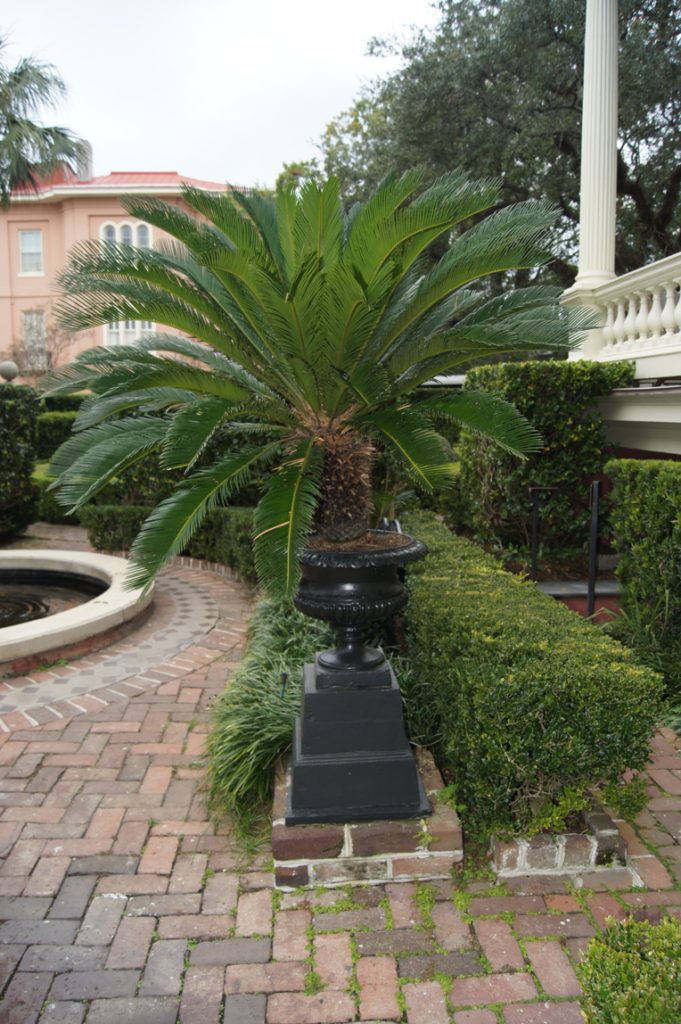 calhoun-mansion-sago-palm-in-urn