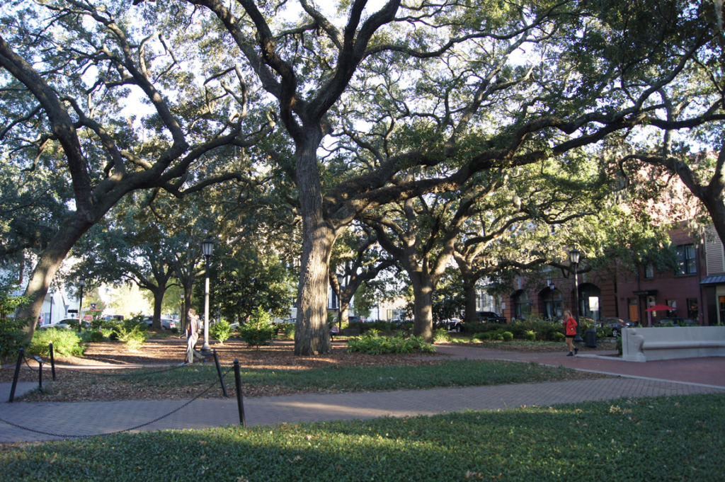 live-oaks-in-the-square